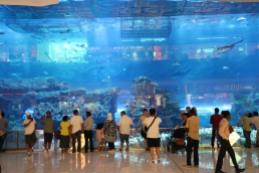 Aquarium in der Dubai Mall